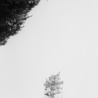 Communications tower and tree
