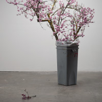 branches in trash-small